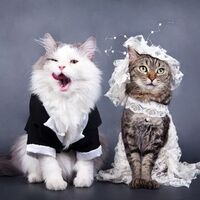 猫にドレスを着せると死ぬほど可愛くなる画像15.jpg