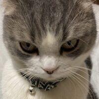【30万いいね】ある理由で「ブチ切れてる猫ちゃん」の怒り方に同情….jpg