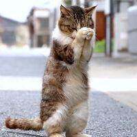 猫が祈れば、お宝当たる!? 佐賀・唐津.jpg